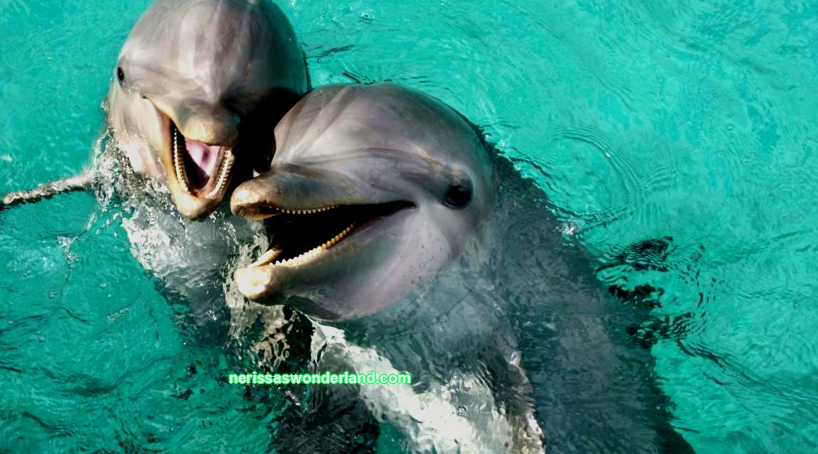 Dolphins are right-handed or left-handed