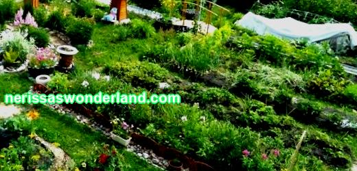 How to make an economical garden design