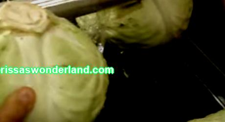 How to keep fresh cabbage until July 1st? 5 effective ways with detailed instructions