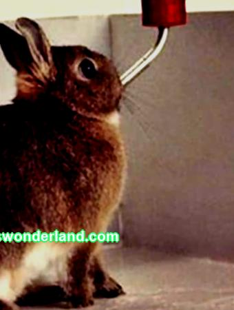 Do-it-yourself drinking bowls for rabbits