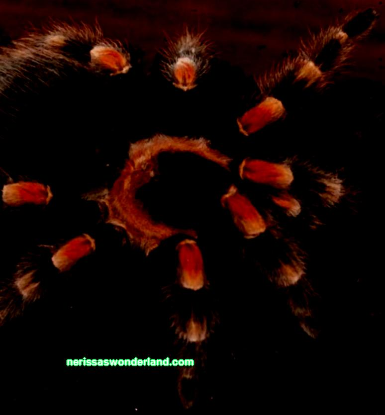 Islamic dream book spider big black | Everything about a person's dreams, consultations with a somnologist