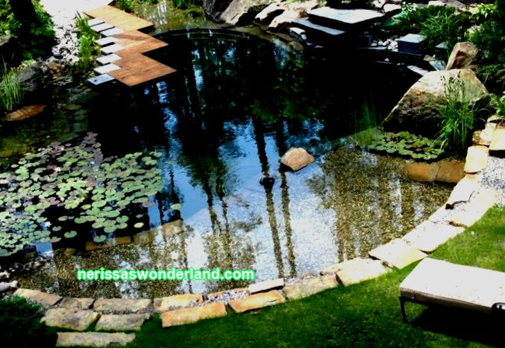 Fish in the country: interesting solutions for the arrangement of ponds