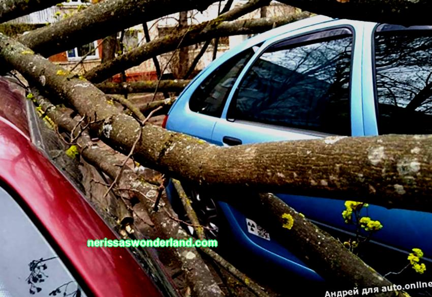 How to get compensation if a tree falls on your car