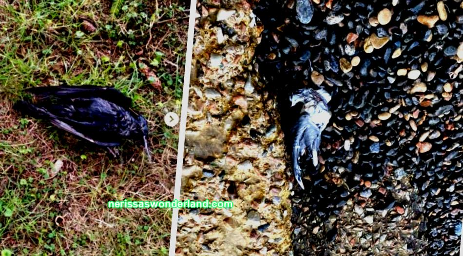 The traces of the fairwerks: a frame of dead birds and tvarin were burnt to the edge in Ukraine