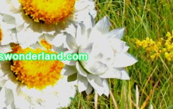 Dried flowers; photos and names, ideas of bouquets and compositions for the interior