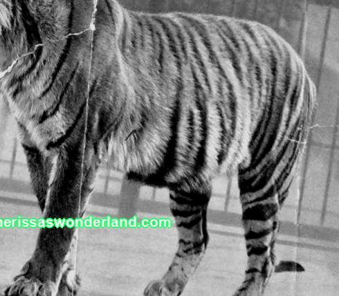 Top 10 extinct animals due to human fault
