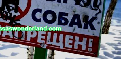 In Lugansk, a ban was introduced on walking animals in parks, squares and urban green areas