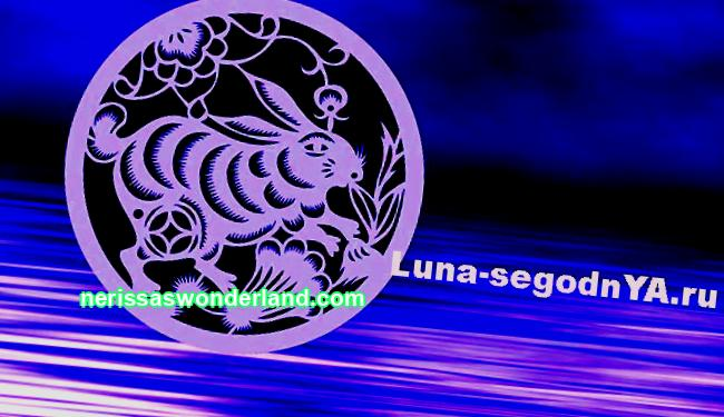 Water Pig Key features of the Chinese zodiac sign