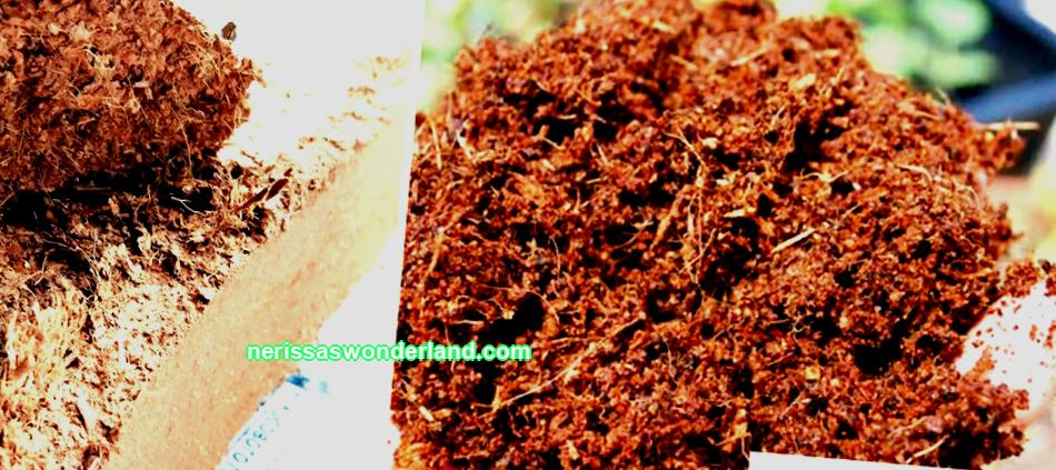 For two years now, I have completely abandoned peat when growing seedlings, having tried a new product -