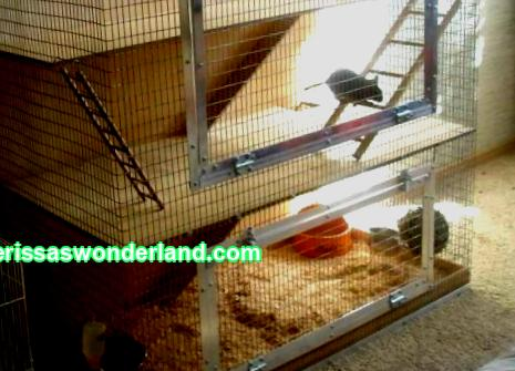 Setting up a degu cage
